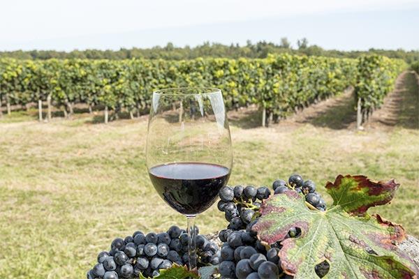 extrait kbis viticulture